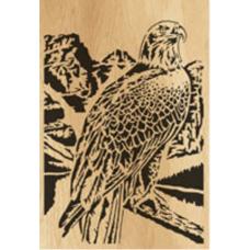 Eagle (11)