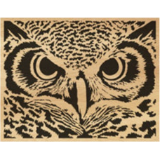 Owl (5)