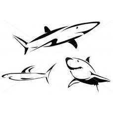 Drie Haaien