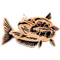 Catfish - Natures Majesty