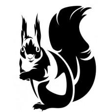 Eekhoorn-1