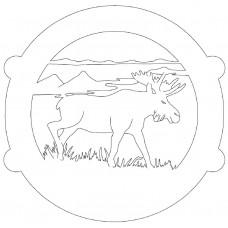 Magnificient Moose