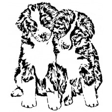 Bernersennen pups