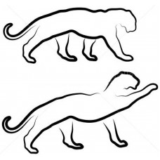 Twee wilde Katten
