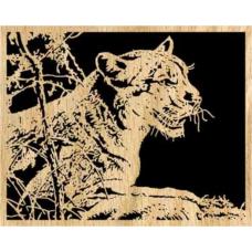 Cougar (1)