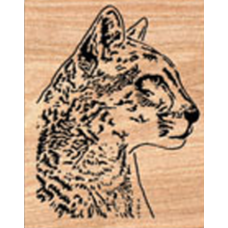 Cougar (2)