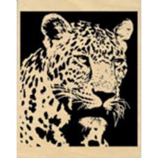Gazing Leopard