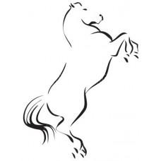 Paard 13