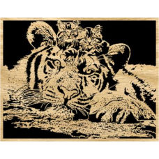 Kittens and Tiger